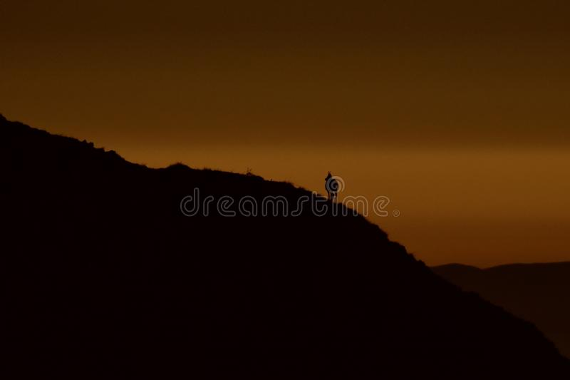 Silhouet van gemzen in bergen royalty-vrije stock foto's