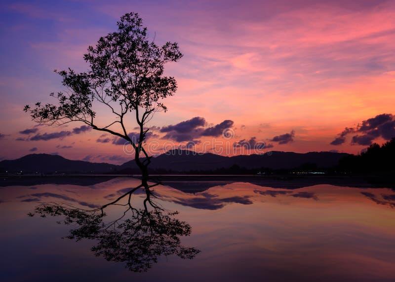 Silhouet van grote boom bij de mooie achtergrond van de schemeringhemel royalty-vrije stock fotografie