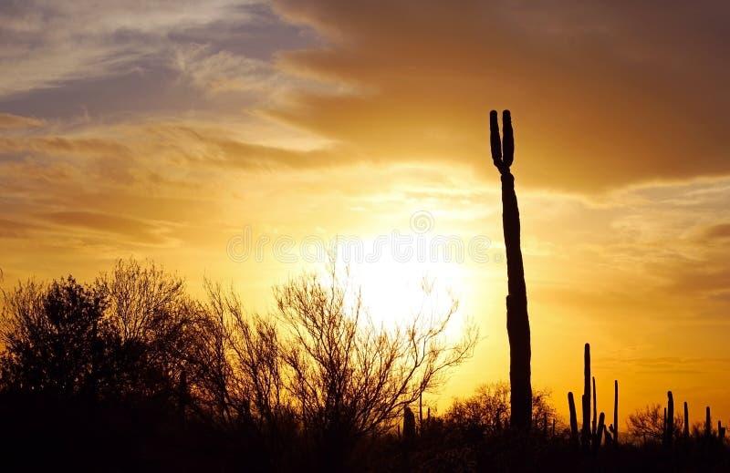 Silhouet van het Nationale Park van Saguaro bij Zonsondergang royalty-vrije stock afbeelding