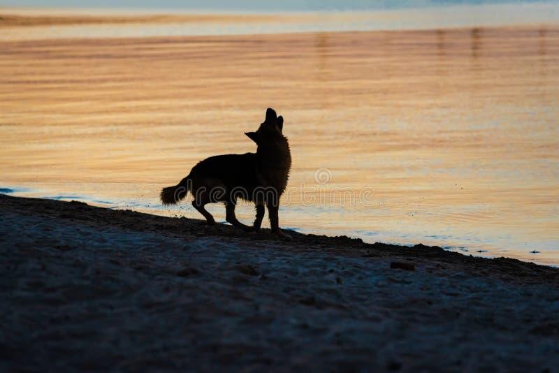 Silhouet van hond bij zonsondergang royalty-vrije stock foto