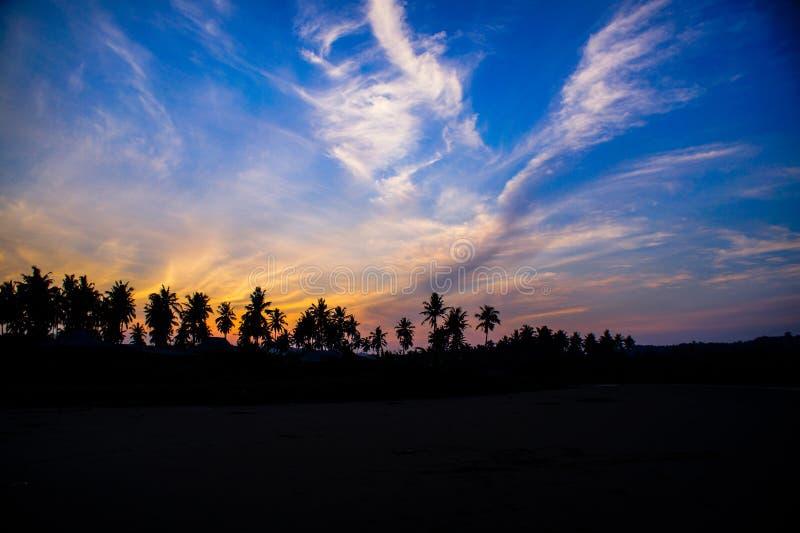 Silhouet van kokospalm royalty-vrije stock afbeeldingen