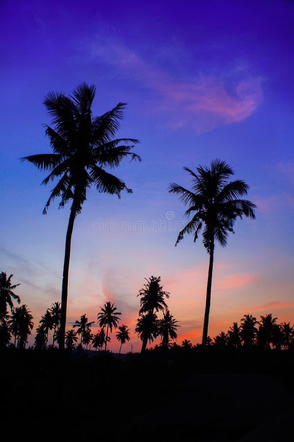 Silhouet van kokospalm stock foto