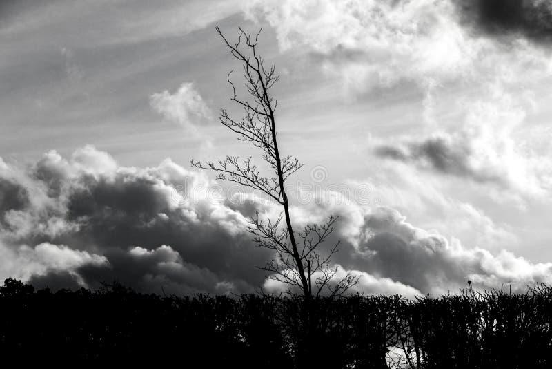 Silhouet van naakte boom voor dramatische hemel royalty-vrije stock fotografie