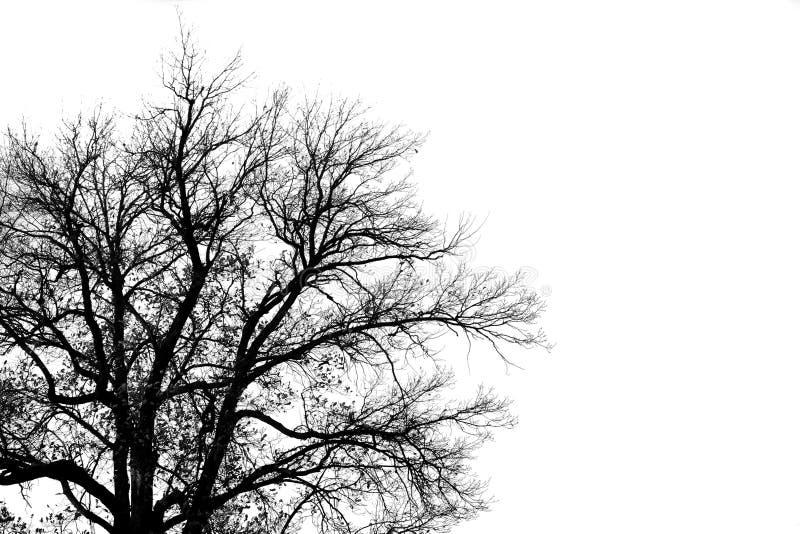 Silhouet van oude boom royalty-vrije stock afbeeldingen