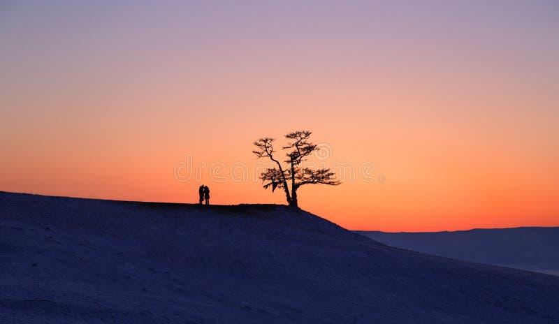 Silhouet van paar onder grote boom in zonsondergang bij Meer Baikal, Olkhon-eiland, Siberië in Rusland Bloem in de sneeuw Het con stock fotografie