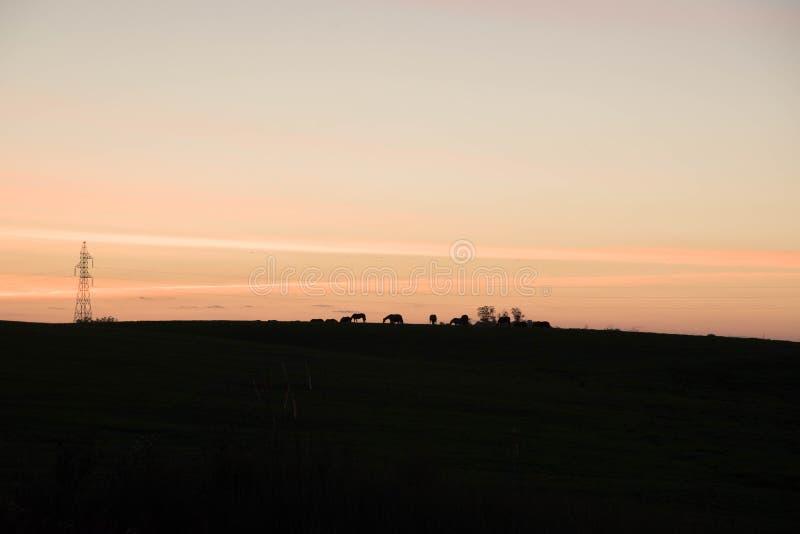 Silhouet van paarden in recente middag 01 royalty-vrije stock afbeelding
