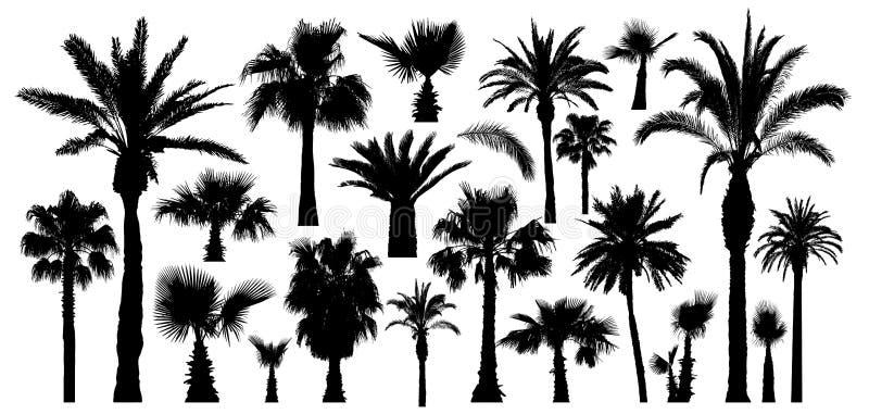 Silhouet van palm het tropische bomen Ge?soleerdj op witte achtergrond Beeldverhaal polair met harten vector illustratie