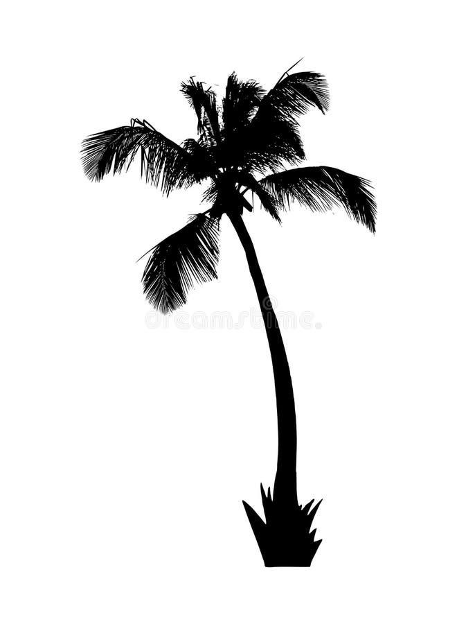 Silhouet van palm op wit royalty-vrije illustratie