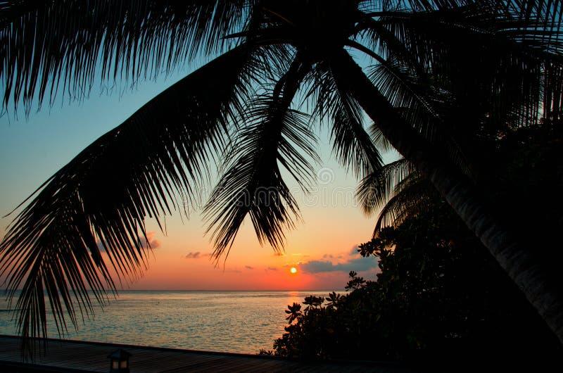Silhouet van palmbladeren op de achtergrond van een mooie het gloeien zonsondergang op de Eilanden van de Maldiven Het landschap  stock afbeeldingen