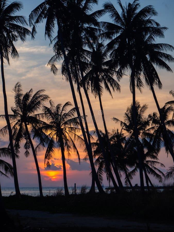 Silhouet van palmen bij zonsondergang en multicolored wolken stock afbeeldingen