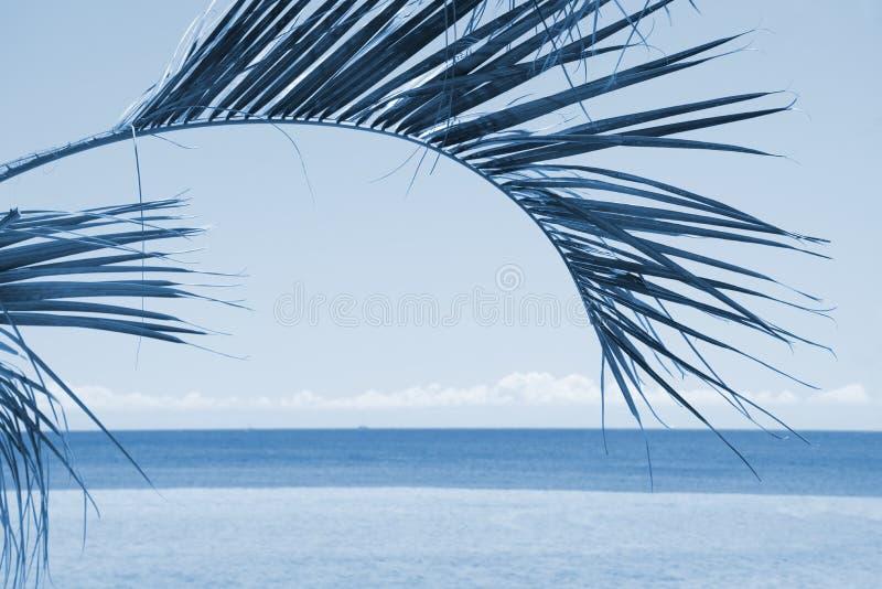 Silhouet van palmen bij zonsondergang op hemel en overzeese achtergrond Uitstekende blauwe filter royalty-vrije stock fotografie