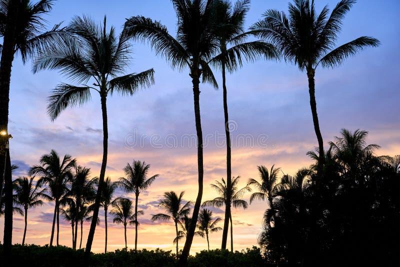 Silhouet van palmen van Maui tijdens Hawaiiaanse zonsondergang royalty-vrije stock foto