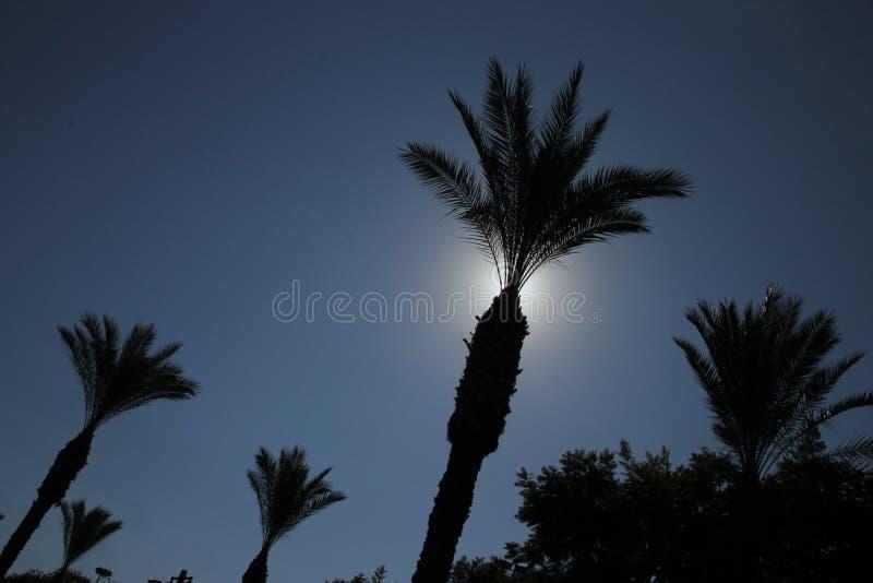 Silhouet van Palmen tegen de duidelijke blauwe hemel royalty-vrije stock foto's