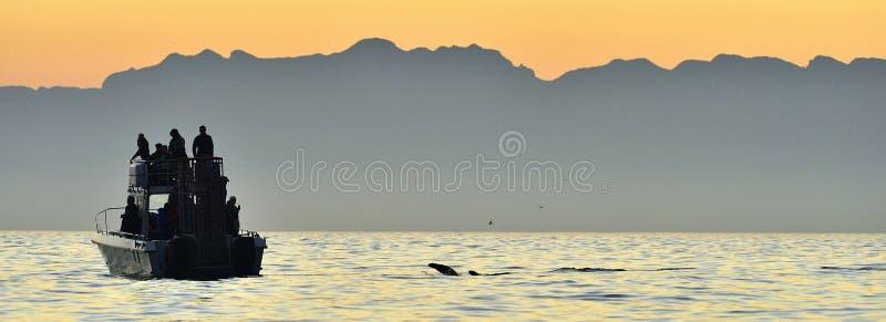 Silhouet van Snelheidsboot in de oceaan bij zonsopgang stock fotografie