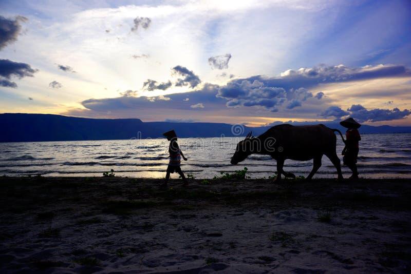 Silhouet van twee jongens en een koe die op een zonsondergangstrand lopen in Indonesië stock foto