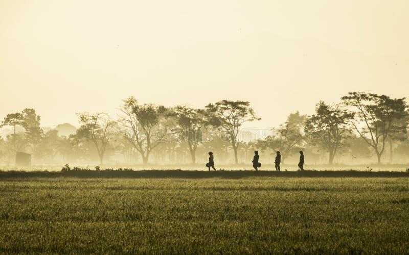 Silhouet van verscheidene mensen die in het midden van enorm padieveld lopen royalty-vrije stock fotografie