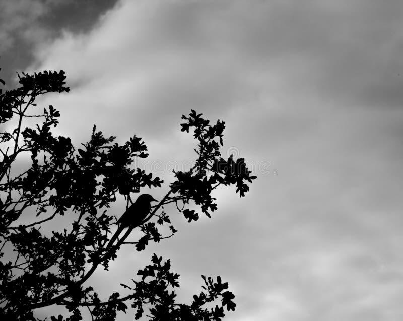 Silhouet van vogel o de boom royalty-vrije stock foto