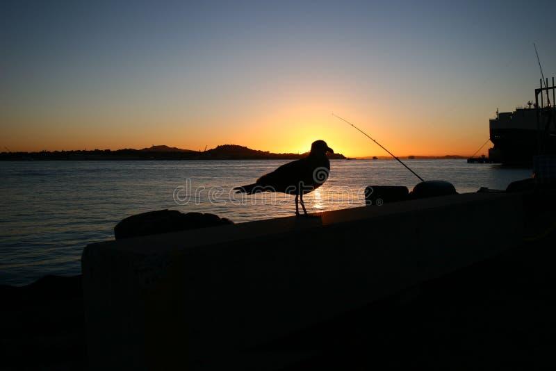 Silhouet van zeemeeuw tijdens zonsopgang stock afbeeldingen