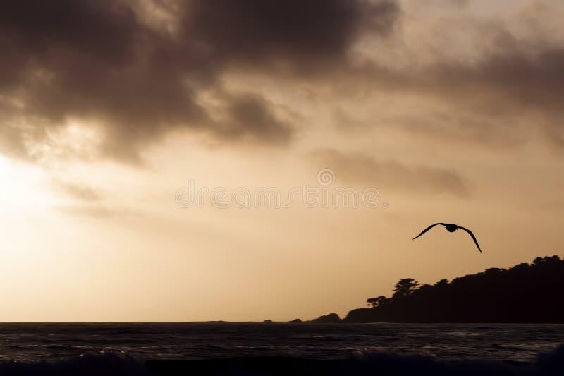 Silhouet Vliegende Zeemeeuw tegen Zonsonderganghemel over Oceaan royalty-vrije stock fotografie
