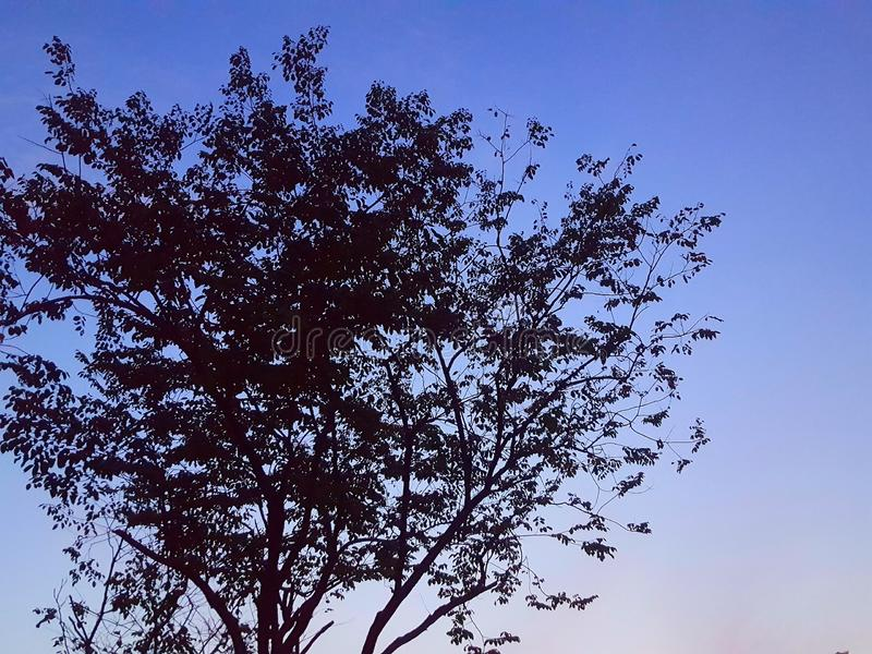 Silhouetboom bij Zonsopganghemel   Dawn Sky stock foto
