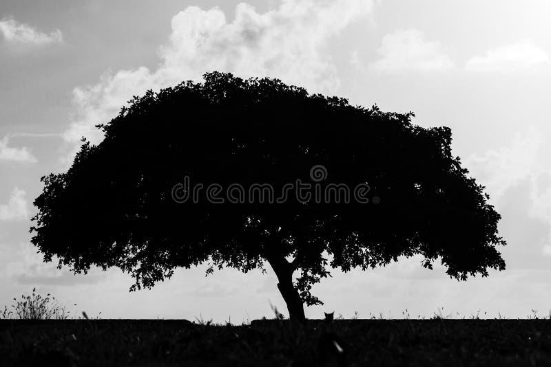 Silhouetboom en kat BW royalty-vrije stock afbeelding