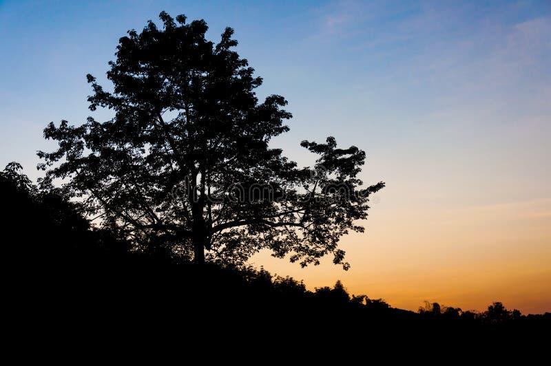 Download Silhouetboom in schemering stock foto. Afbeelding bestaande uit twilight - 39113660