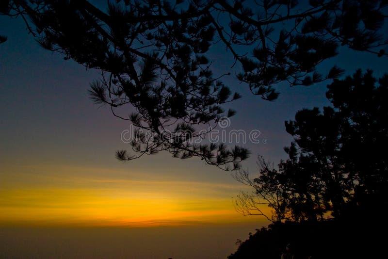 Silhouetbos in zonsondergang stock afbeelding