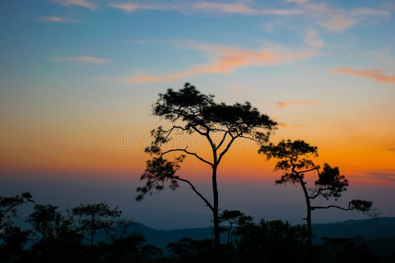 silhouetconcept; Sunset View Point op Phu Ruea National Park, Loei, Thailand, Golden sky background, twilight sky after sunset royalty-vrije stock afbeeldingen