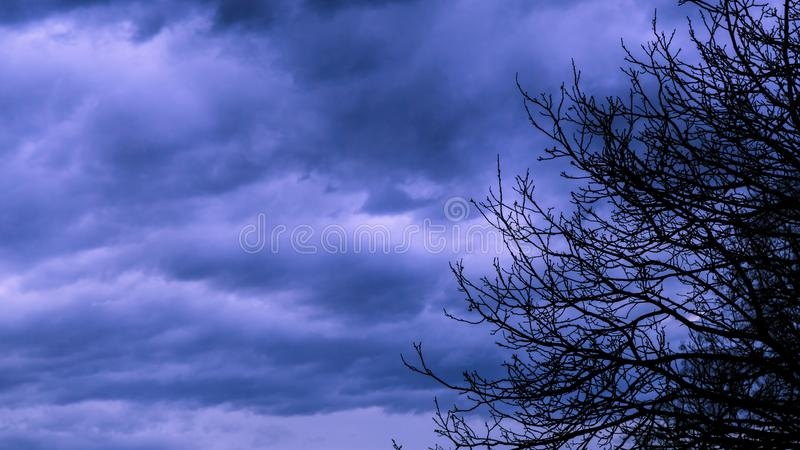 Silhouete of tree branches with dark cloudy sky. Before a thunder-storm stock photography