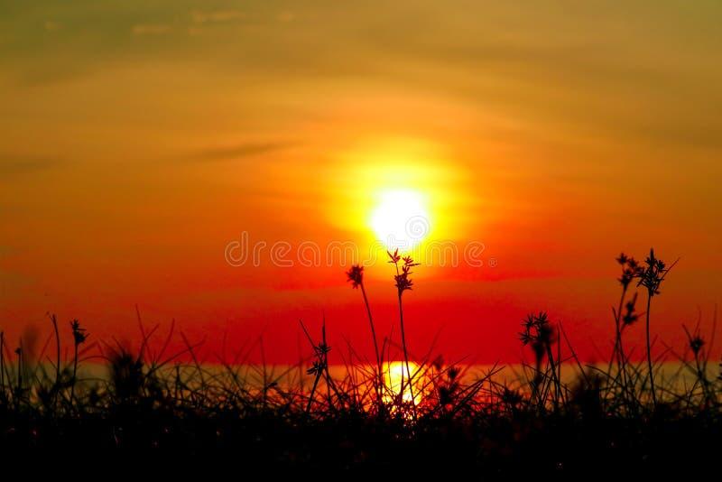 silhouetgras en onkruid op strand vage zonsonderganghemel stock foto's