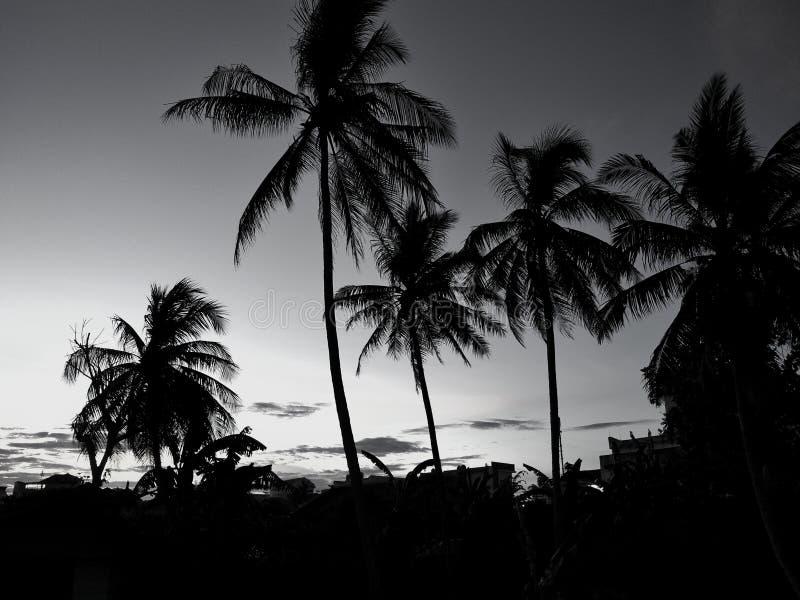 Silhouetkokospalmen tijdens zonsondergang Zwart-wit concept stock foto
