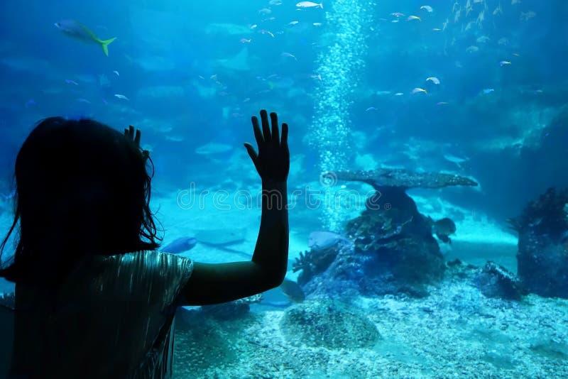 Silhouetmeisje voor een aquarium royalty-vrije stock afbeelding