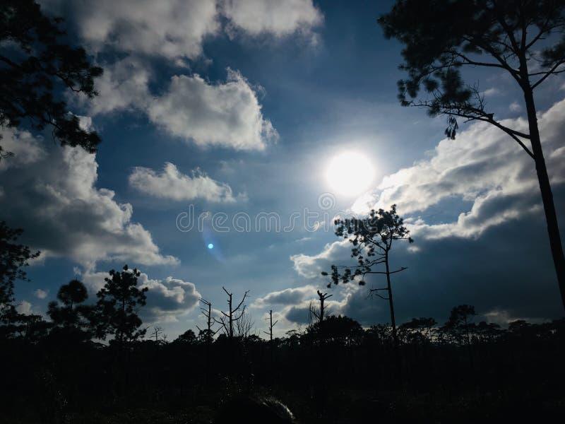 Silhouetmening van boom tegen zonlicht op blauwe hemel stock foto's