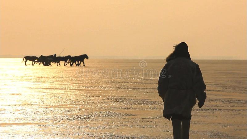 Silhouetpaarden op het strand tijdens zonsondergang royalty-vrije stock foto's
