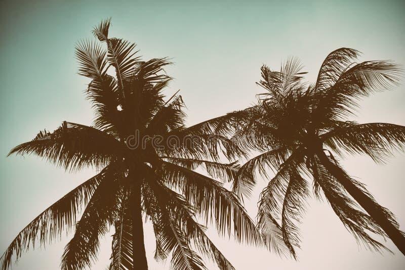 Silhouetpalm op uitstekende filterachtergrond royalty-vrije stock foto's