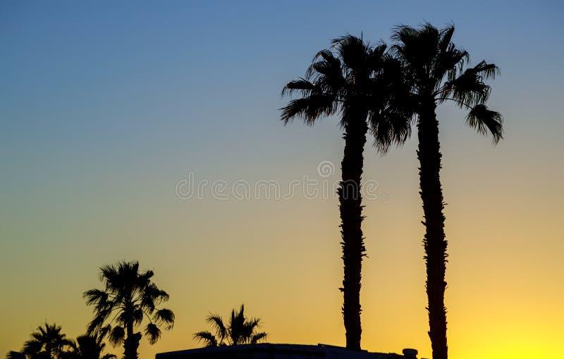 Silhouetpalmen bij tegen de hemel tijdens een zonsondergang royalty-vrije stock afbeelding