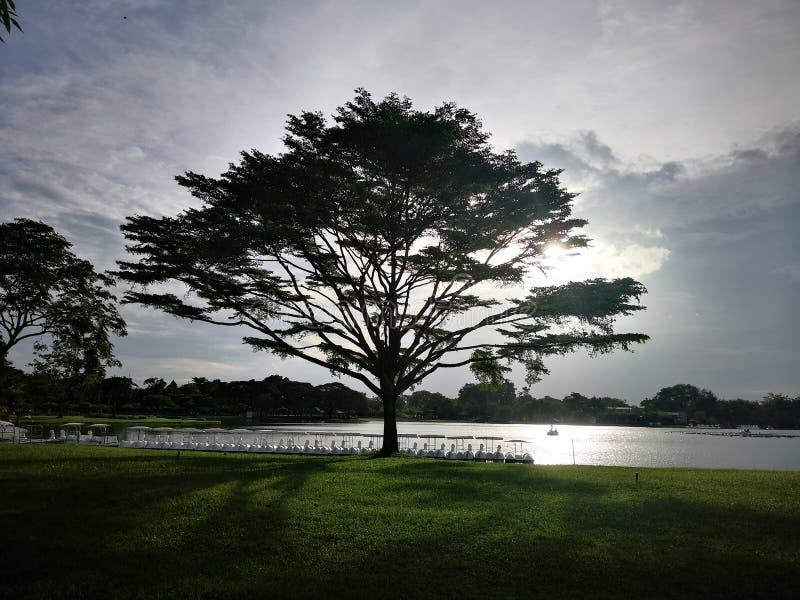 Silhouetteâ€-‹großer Baum stockfotografie