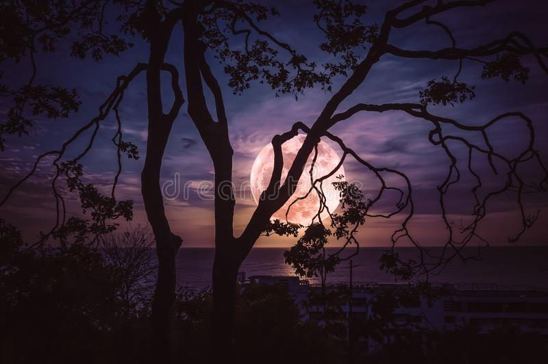 Silhouette ветви деревьев против неба и полнолуния над морем стоковое изображение