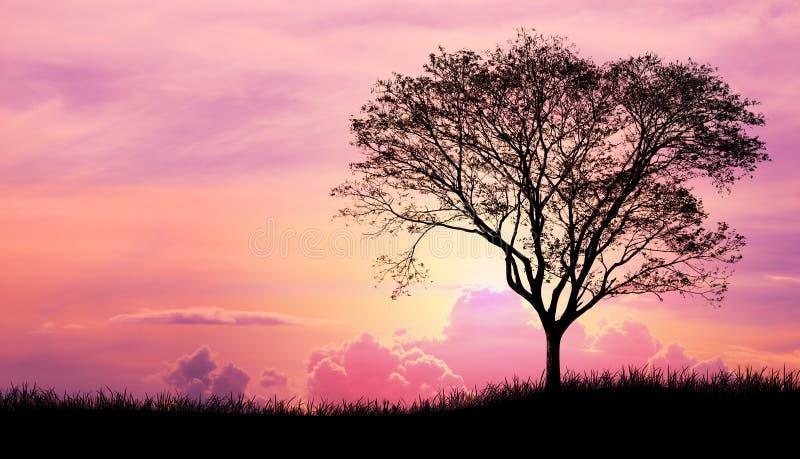 Silhouette дерево и трава в розовой фиолетовой предпосылке облака неба иллюстрация вектора