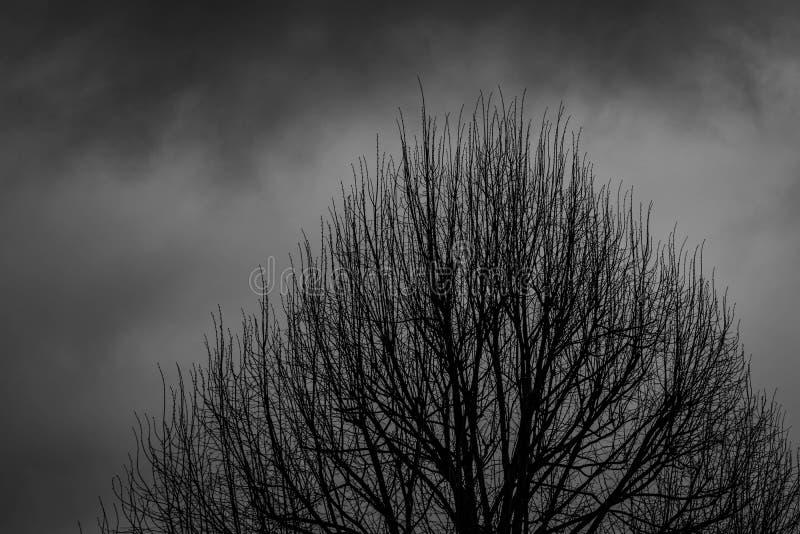 Silhouette мертвое дерево на темной драматической предпосылке неба для страшного или смерти легко редактируйте ночу изображения h стоковые изображения