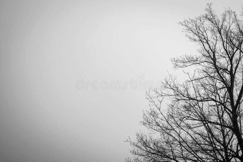 Silhouette мертвое дерево на темной драматической предпосылке неба для страшного или смерти легко редактируйте ночу изображения h стоковая фотография rf