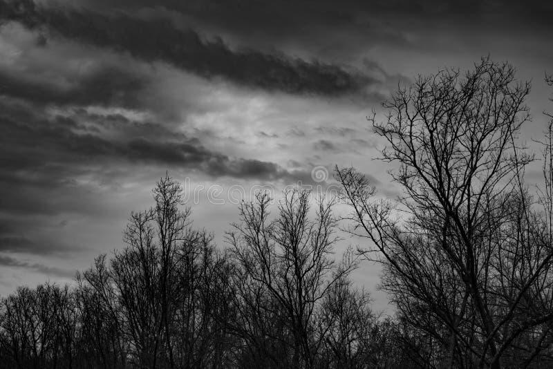 Silhouette мертвое дерево на темном драматическом сером небе и заволоките предпосылка для страшного, смерти, и концепции мира Ден стоковое изображение