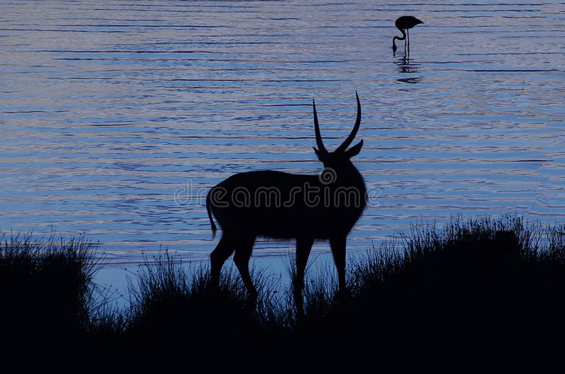 Silhouette royalty free stock image