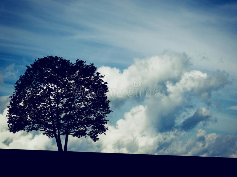 Silhouette of Adler Tree with Clouds on background stock photos