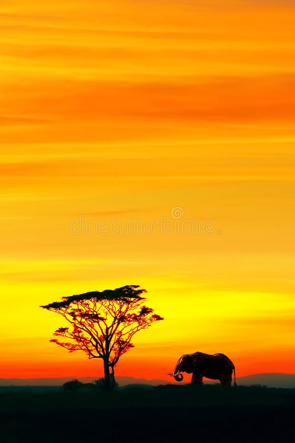 Silhouette of African elephant and lonely tree against the backdrop of the beautiful red and yellow sunset. royalty free stock image