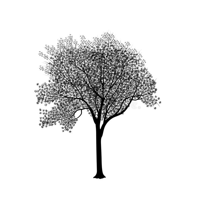 Silhouette: an ash-tree with leaves stock illustration