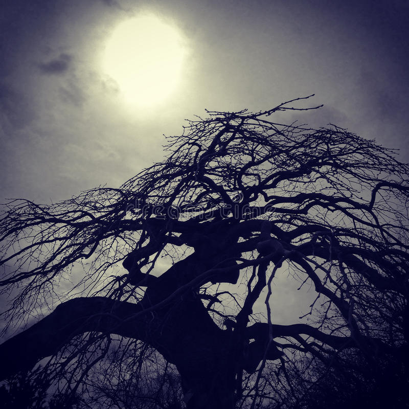 Silhouette of an Asian tree with the sun royalty free stock photography