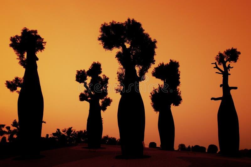 Silhouette australian baobab trees royalty free stock photo