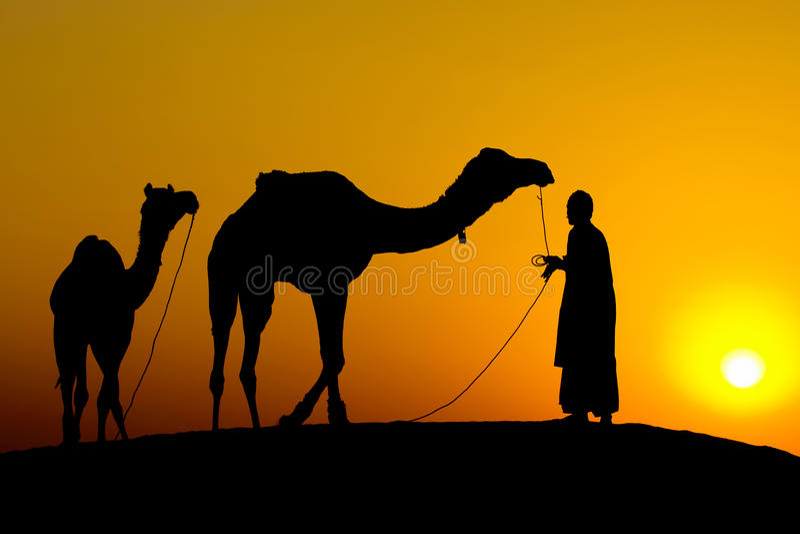 Silhouette av en man och två kamel royaltyfria bilder