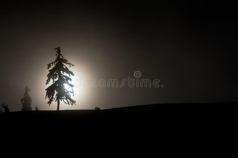 Silhouette av en sörjatree arkivbild